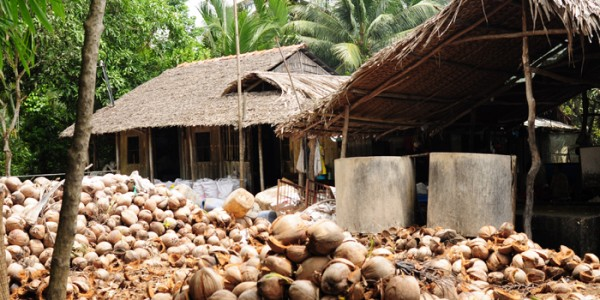 House with jobs of coconut in Mekong Delta
